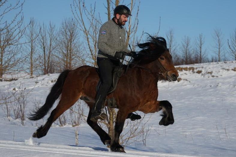 Gestüt Wechter Mark: Zucht, Ausbildung und Verkauf von Islandpferden