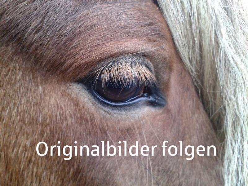 Gestüt Wechter Mark: Aufzucht und Verkauf von Islandpferden